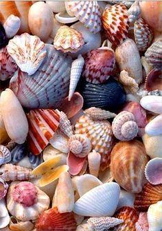 Sea shells of Sanibel. Sanibel is known for its shells. I Need Vitamin Sea, Sanibel Island, Jolie Photo, Shell Art, Ocean Beach, Shell Beach, Summer Beach, Ocean Sailing, Seaside Beach