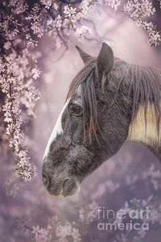 Gypsy Horse, Horses, Wall Art, Portrait, Spring, Animals, Animales, Headshot Photography, Animaux