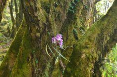 Орхидея.  Марди Химал трек и рафтинг по Белой воде., Hikeup