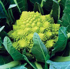 Veronica Cauliflower Conventional & Organic