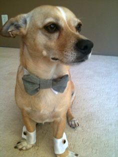 Formal Wedding Dog Cuffs!