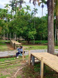 สถาปนิกลาออกกลับบ้าน#3 ใช้ชีวิตตามรอยพ่อหลวง สู่แนวทางแห่งความยั่งยืน - เรื่องเด็ด Tropical House Design, Tropical Houses, Bamboo House, Bamboo Crafts, House In The Woods, Walkway, Outdoor Furniture, Outdoor Decor, Pathways