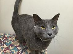 Hello! I'm Azul, one of the 39 cats who came to OHS recently, and I am now in…