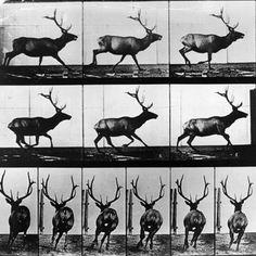 Eadweard-Muybridge