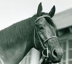 My 29 year old mares grandfather! Citation: More than 60 years after his 1948 Triple Crown, he is still regarded as one of the greatest of all time. Most Beautiful Horses, Animals Beautiful, Calumet Farm, The Belmont Stakes, Preakness Stakes, Thoroughbred Horse, Horse Horse, Triple Crown Winners, Derby Winners