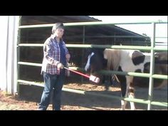 Clicker Training A Horse - The first thing I teach is targeting