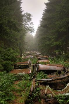Abandoned cars in the Belgium woods.
