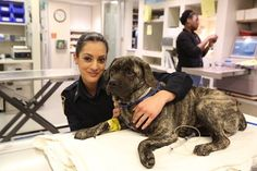 NYPD'S response to 'vicious' dog~Two officers responded & found a motionless pit bull in the middle lane. Officer Morinia-Blocker used her patrol car to keep Officer Mezzoiuso safe as she approached the dog. She determined the dog was not vicious but scared & hurt. She bundled the injured dog into her arms & moved him. The dog was taken to ASPCA in Queens & decided he needed the animal hospital in Manhattan. Both visited the dog where despite suffering a broken leg, he'll make a full…