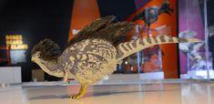 緑色のうろこに覆われたけだものという過去のイメージを覆し、最新の科学的知見に基づいて、鳥は恐竜であることを示す恐竜展がニューヨークで開催されている。