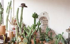 Coming Soon: Madre Cacti Co. Cactus Plants, Nursery, Baby, Cacti, Babies Rooms, Cactus, Newborns, Baby Room, Child Room