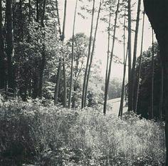 #Wood #Trees #Summer