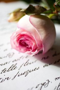 """Cause a rose is still a rose"""" Aretha Franklin"""