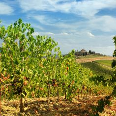 Illusion Wanderer, Chianti hills between Florence and Siena by B℮n Chianti Classico, Under The Tuscan Sun, Siena, Tuscany, Provence, Illusions, Vineyard, To Go, Things To Come