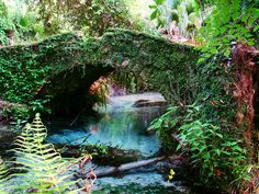 Juniper Springs - Ocala National Forest, Florida