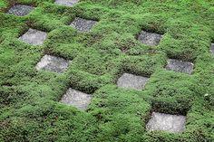Zen Bvuddhist garden | Peter Randall Photography: Prints, Books, Exhibits