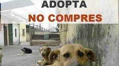 Petition · Dr. Alejandro Char Chaljub- Mayor of Barranquilla: HELPING OUR DOGS AND STREET kittens · Change.org