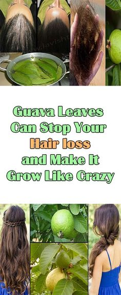 Guava Leaves Can Stop Your Hair loss and Make It Grow Like Crazy Hair loss is a common problem for many men and women which is hard to treat no matter what kind of treatment you try.