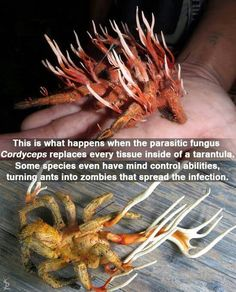 Fungus cordyceps. Replaces all living tissue, and when there is no more to replace, it grows out of you. The Last of Us video game didn't even need to make anything up, except the idea of it transferring to humans. Creepy! :D