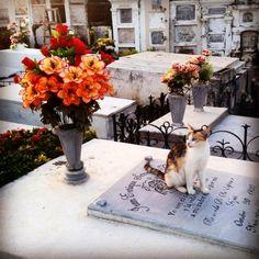 Colombia - En el cementerio de Monpox, Bolívar, los gatos campan a sus anchas.