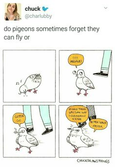 Do pidgeons sometimes forget they can fly or | funny text posts