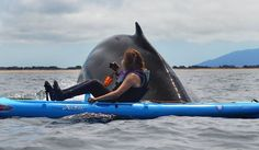 Karen Hatch had a 40-ton visitor last week when she paddled her kayak from Moss Landing into Monterey Bay. Photo: Giancarlo Thomae, Courtesy Photo