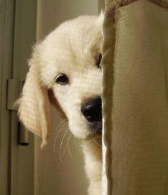 Peeking around the corner