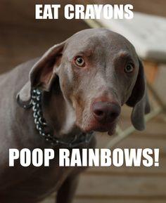 332 Best Weimaraners Images Weimaraner Dogs Cute Animals