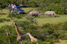 Top 5 places to enjoy in African wildlife safari tours Wildlife Trails Safaris Bus Travel, Travel Tours, Travel Deals, South Africa Tours, East Africa, Boulder Beach, Tanzania Safari, Wildlife Safari, Small Group Tours