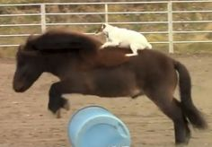 Even dogs loves horse riding... www.horse.co.nz