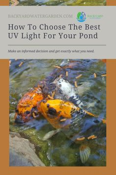 It's easy to get lost in the sea of available options when you are trying to choose the right UV light for your pond. Don't get overwhelmed, let us help you make an informed decision. After reading this you will know exactly what you need, and how to incorporate it into your pond design. Pond Design, Landscape Design, Ponds Backyard, Backyard Landscaping, Pond Construction, Diy Pond, Choose The Right, Small Ponds, Backyard Projects