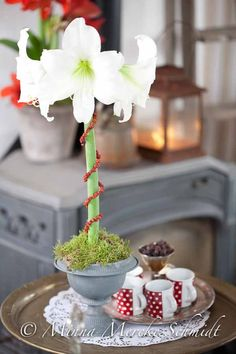 Driva amaryllis   blomsterverkstad   Sköna Hem