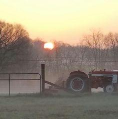 Foggy morning on my little farm.