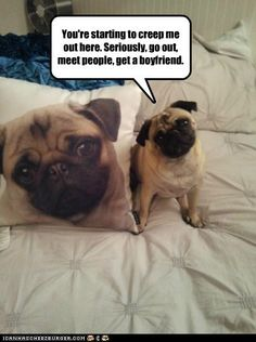 You're starting to creep me out here..❤ Pugs