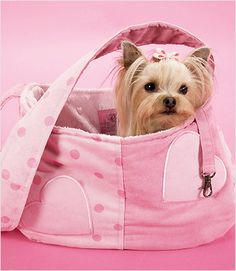 Sweet Little Yorkie in her Pink Heart Dog Carrier Yorkshire Terriers, Yorkies, Cute Puppies, Cute Dogs, Corgi Puppies, Dog Sling, Pet Carriers, Little Dogs, Dog Design
