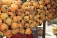 Les fruits du néflier :) #Fruits #Nefle #Travel #MyMadagascar #Madagascar #ZHTProject   © 2014. Rakotolehibe Valisoa.