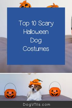 Want to dress your pups up in some scary Halloween dog costumes this year!We've got you covered! Dog Halloween Costumes, Cute Costumes, Dog Costumes, Scary Halloween, Cute Dog Collars, Diy Dog Toys, Dog Accessories, Dog Treats, Small Dogs
