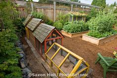Backyard city garden of Jennifer Carlson. Includes chickens, rabbits, doves, raised beds of organic vegetables and herbs. Seattle, Washington. Saxon Holt Photography/PhotoBotanic Garden Library