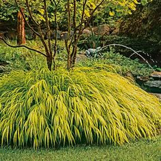 Japanese Forest Grass (Hakonechloa macra 'Aureola', zones 5 to My favorite is the variegated variety. I planted mine under a Japanese maple, and the contrast was genius and it has so much movement. traditional plants by Stark Bros Spring Garden, Lawn And Garden, Garden Grass, Garden Bed, Shade Garden, Garden Plants, Patio Plants, Vegetable Garden, Hakone Grass