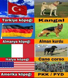 Cane Corso, Ottoman Empire, Call Of Duty, Naruto Shippuden, Funny Photos, Karma, Comedy, Jokes, 1