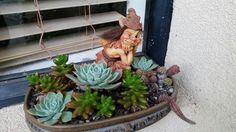 My first succulent garden