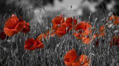 Poppies Poppies, Heaven, Plants, Painting, Art, Art Background, Sky, Heavens, Painting Art