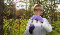 Agronomist Cristina Negri collects poplar samples to measure the pollutants sucked from the earth.