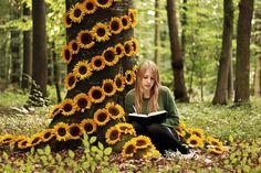 sunflower hideaway.