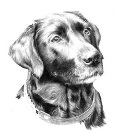 how to draw a labrador puppy step by step | ... Grey on White: Finishing stages of portrait drawing of black labrador