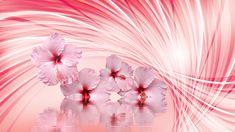 Hibiskus, Kwiaty, Woda, Odbicie, Grafika 2D