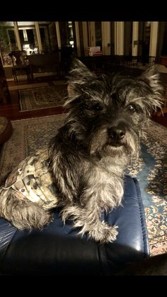 Cairn Terriers, Little Dogs, I Love Dogs, Doggies, Puppies, Big, Cute, Animals, Dogs