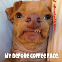 My before coffee face OMG! This is our dog Harli!