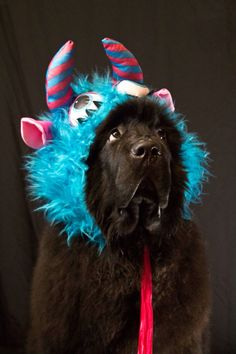 Notta Bear Newfoundlands Meshack is all dressed up for Halloween in his dog costume - the adorable beast! Black Lab Puppies, Cute Puppies, Cute Dogs, Dogs And Puppies, Doggies, Animal Costumes, Pet Costumes, Large Dog Breeds, Large Dogs