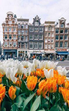 Tulips in Amsterdam, Netherlands!