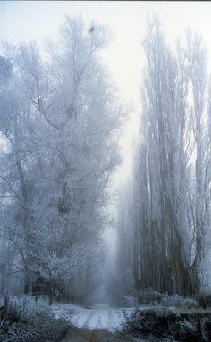 'Mystery Lane' - photo South Island, New Zealand.